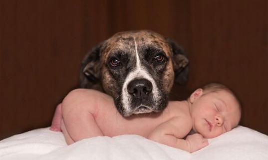 protéger bébé et son chien