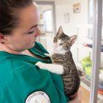 La consultation vétérinaire