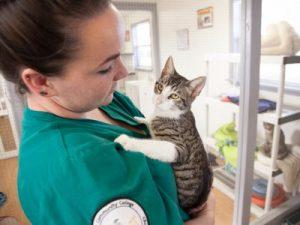 consultation veterinaire chat