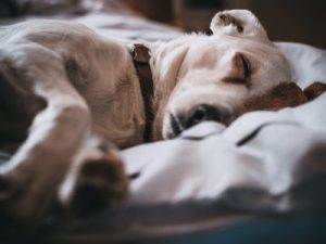 dormir avec son chien