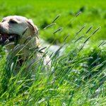 Le tétanos : une maladie rare mais mortelle