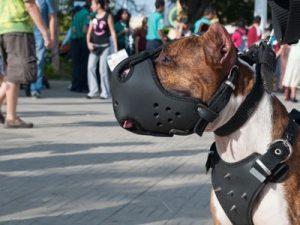 museliere pour chien