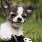 Assurance et mutuelle sante chihuahua
