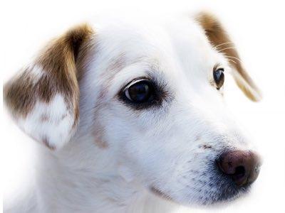 donner medicament chien