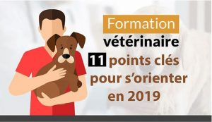 infographie-formation-veterinaire