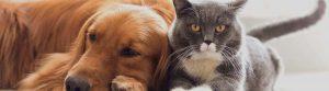 mutuelle pour chien et chat à comparer