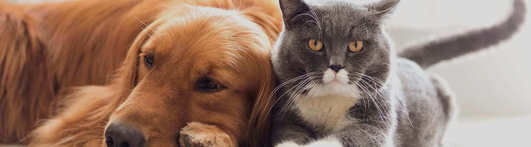 le mammouth dechaine assurance chien et assurance chat