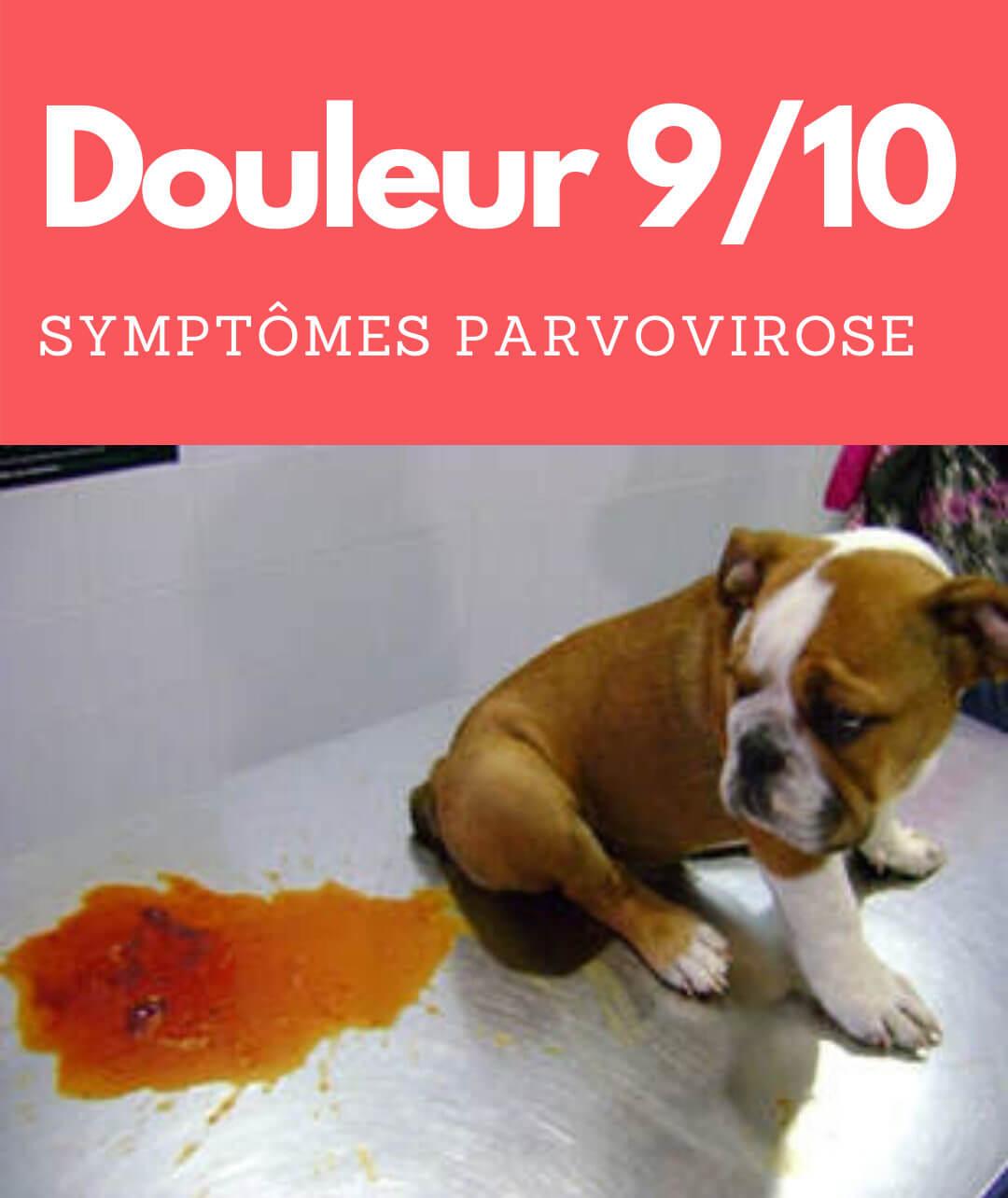symptome de la parvovirose canine