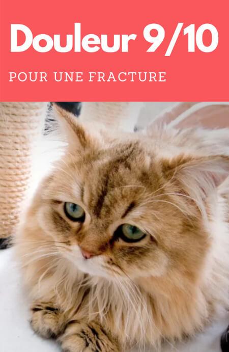 chat avec fracture