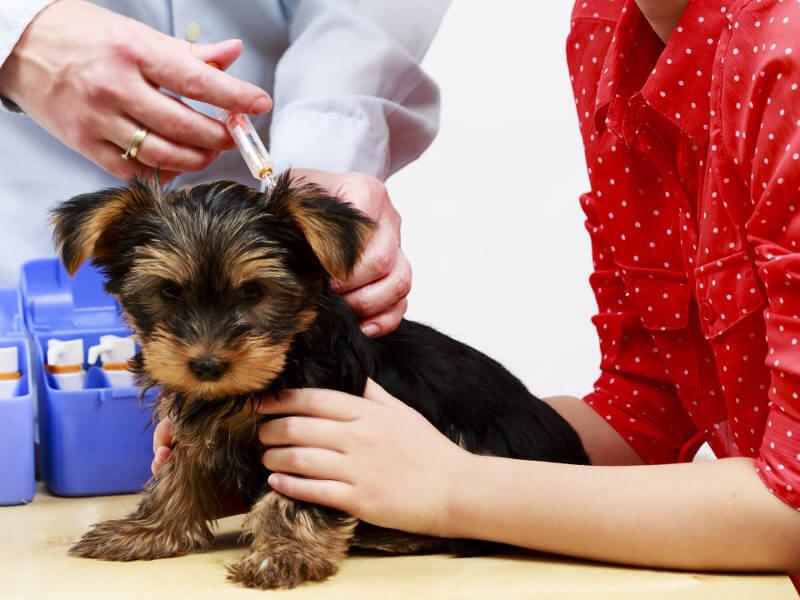 vaccins du chien : prix, calendrier et conseils
